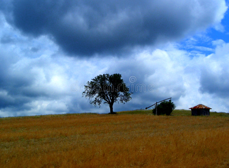 Download Storm....(1) stock photo. Image of farmland, wind, biology - 197286