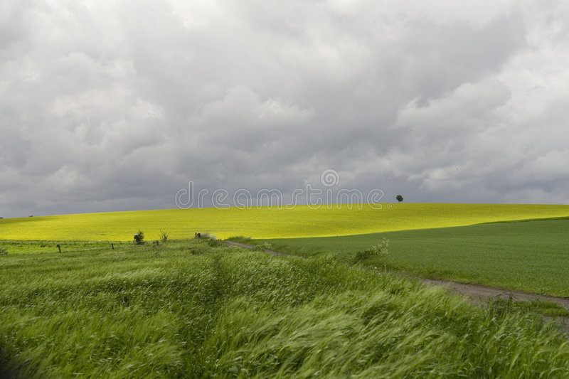 Before the Storm royalty free stock image