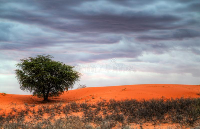 Storm approaches in the Kalahari royalty free stock image