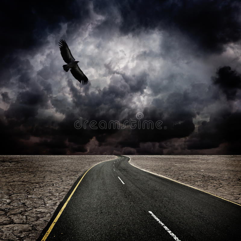 Free Storm, Bird, Road In Desert Royalty Free Stock Photo - 22271615