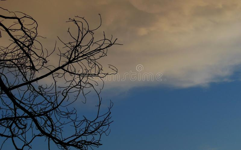 Storm Brewing above Dead Tree stock images