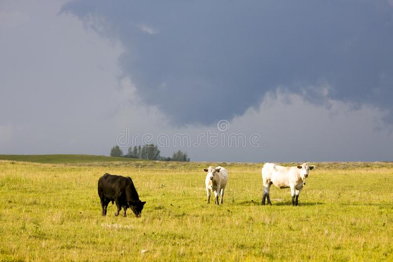 Storm Clouds Canada. Rural countryside Prairie Scene stock images