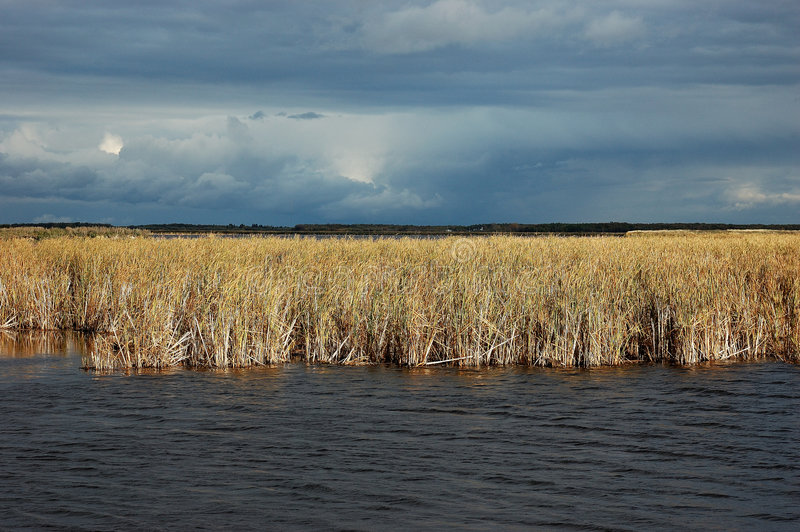 Download Storm Clouds Over The Marsh Stock Image - Image: 1953497