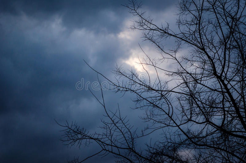 Storm clouds. With tree bough royalty free stock photo