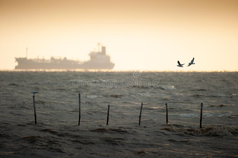 Storm is coming. Couple Seagulls flying, shipping goes to the ocean. Copy space. Life concept. stock photography