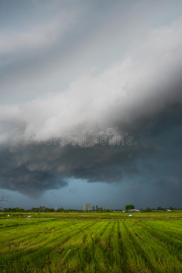 Storm is coming. Rain cloud is moving to ward rice field royalty free stock photography
