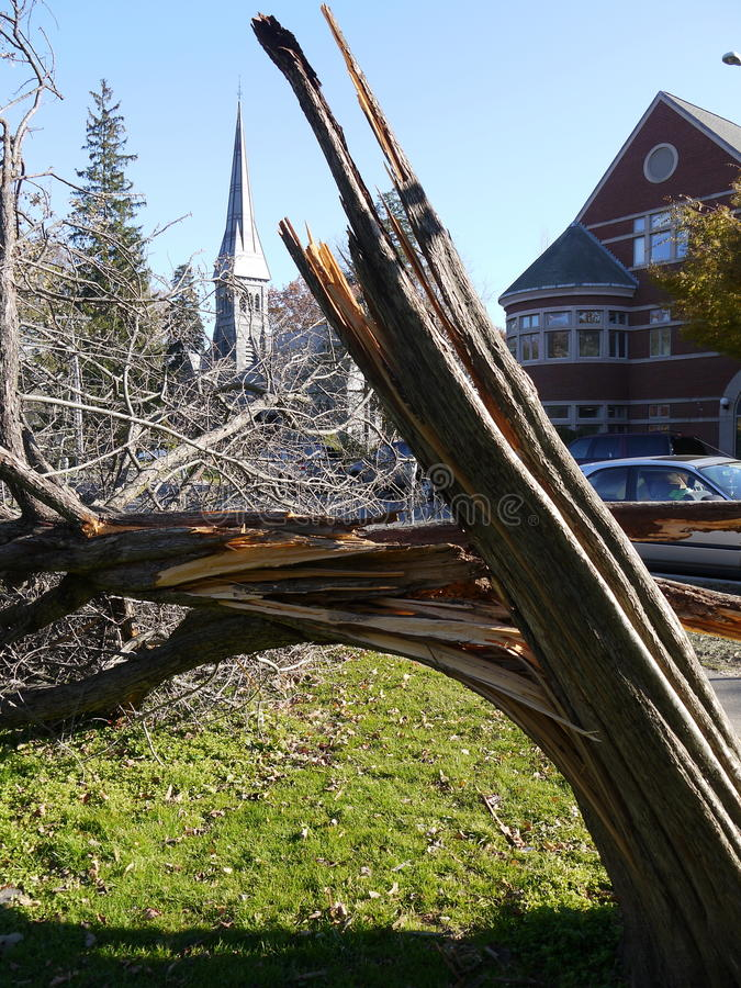 Storm Damage: Broken Tree In City Stock Photography