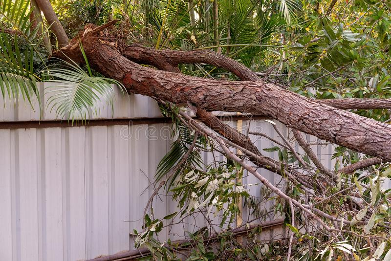 Storm Damaged Tree Fallen On A Fence stock photo