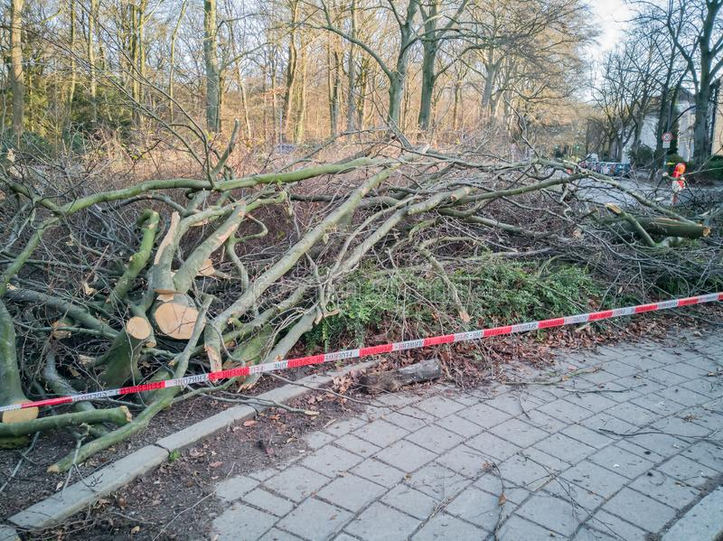 Storm in Hamburg trees overturned with cordon tape Feuerwehr Sperrzone German text for fire department restricted area.  stock images