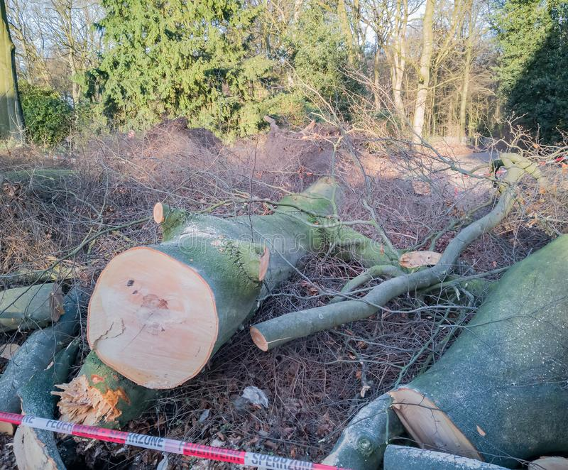 Storm in Hamburg trees overturned with cordon tape Feuerwehr Sperrzone German text for fire department restricted area.  stock photography