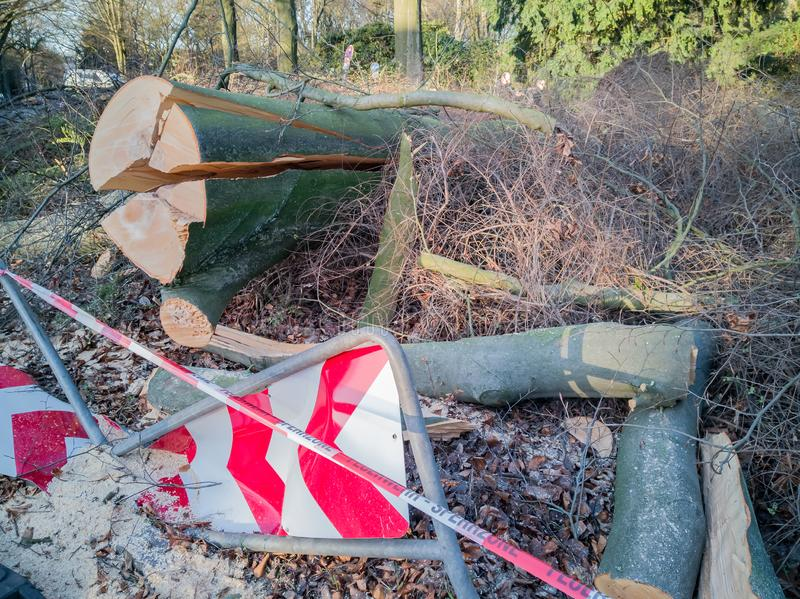 Storm in Hamburg trees overturned with cordon tape Feuerwehr Sperrzone German text for fire department restricted area.  stock photos