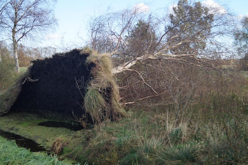 Uprooted trees by storm. Storm Herwart uprooted the trees in the nature reserve Ruebker Moor stock photos
