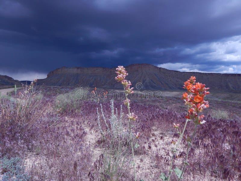 Utah desert stock photo