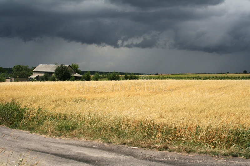 Download Storm over the field stock image. Image of wheat, rain - 178877