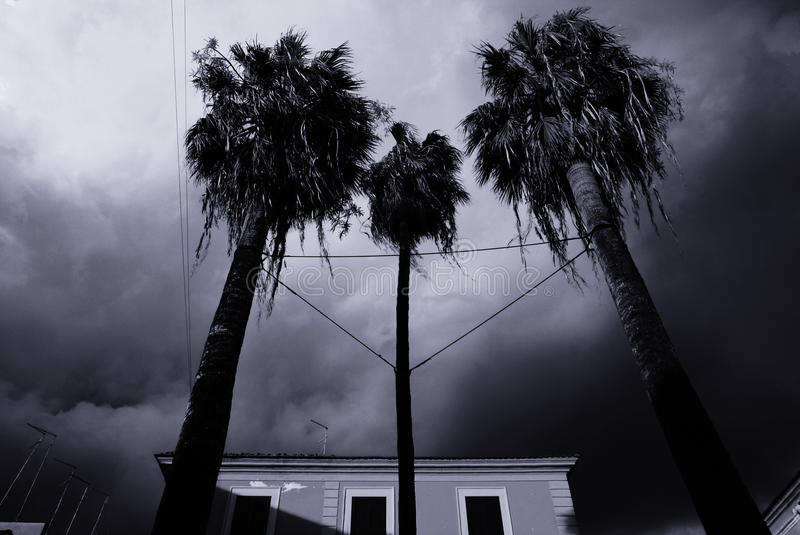 Download Storm sky stock image. Image of palm, black, trees, time - 25895469