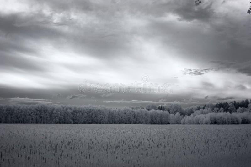 Stormachtige hemel over een bosfotografie van IRL royalty-vrije stock fotografie