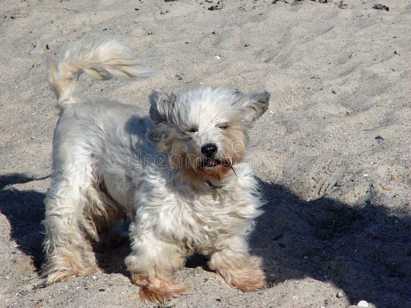 Stormachtige hond