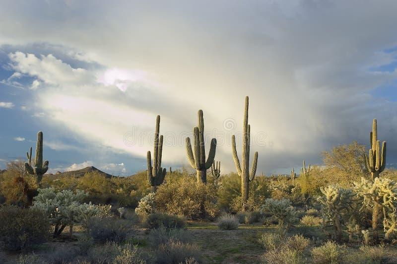 Stormachtige Sonoran Woestijn, Arizona stock afbeeldingen