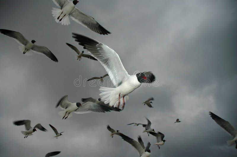 Stormachtige Vlucht stock afbeelding