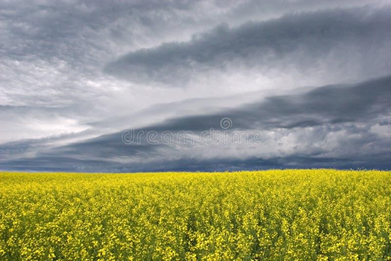 Stormclouds au-dessus de la prairie image stock