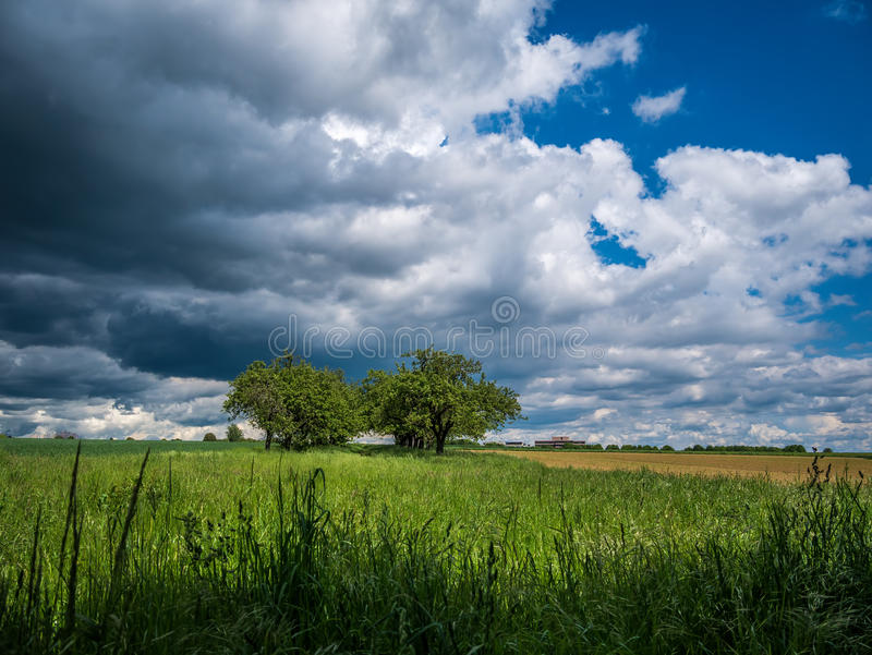 Stormen bryggar över en naturträdgränd arkivbilder