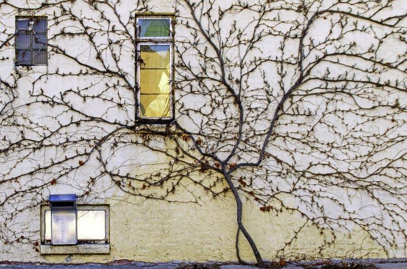 Stormende wijn die de kant opsteekt van een oude stadsmuur royalty-vrije stock fotografie