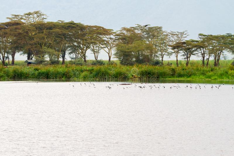 Stormi degli uccelli in cratere di Ngorongoro, Serengeti immagini stock libere da diritti
