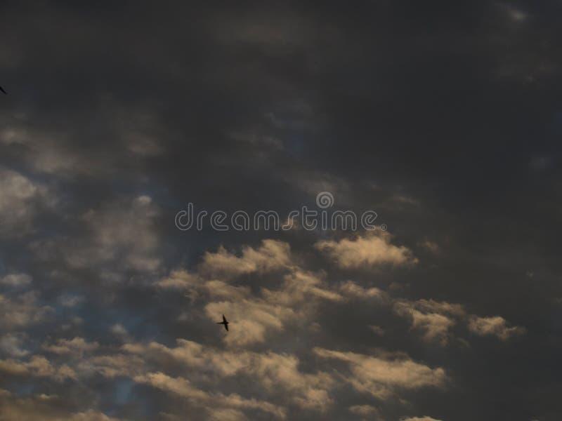 Stormig himmel för mörk solnedgångafton med guld- moln för stackmoln, exponerade av guld- gult solljus royaltyfria foton