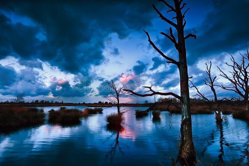 Stormig solnedgång över myren med döda träd royaltyfri bild