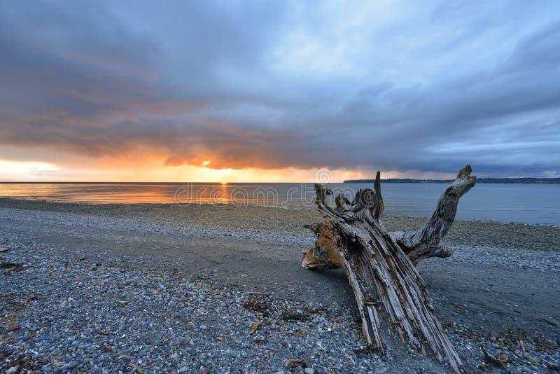 Stormig solnedgång för björkfjärddelstatspark royaltyfria bilder