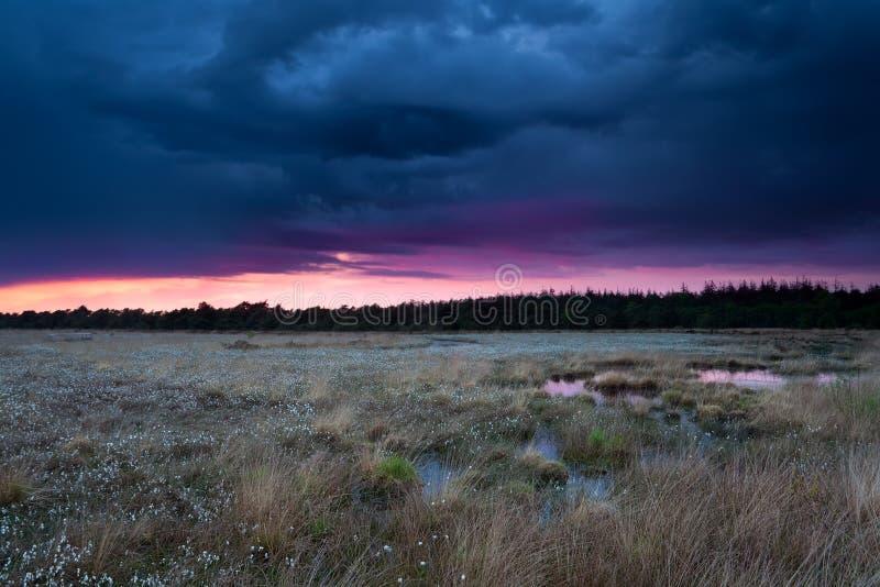 Stormig solnedgånghimmel över träsk med cottongrass fotografering för bildbyråer