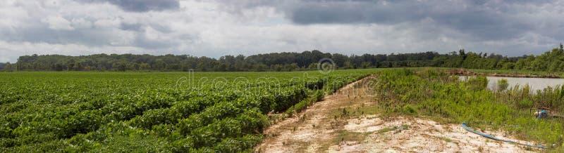 Stormiga himlar över ett fält av jordbruksprodukter royaltyfri bild