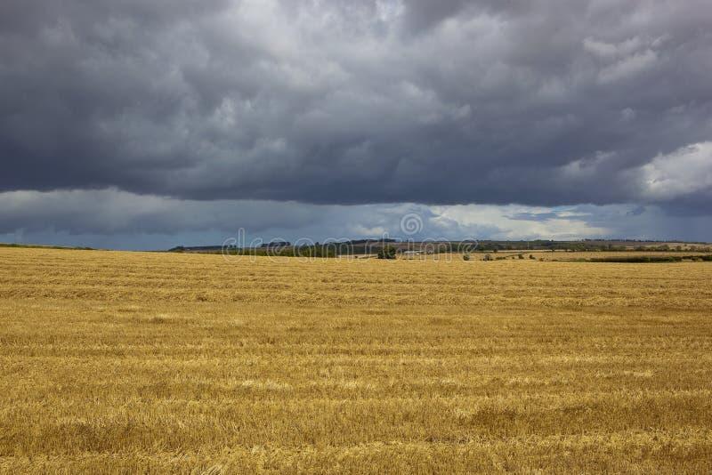 Stormiga himlar på skördtid royaltyfria bilder