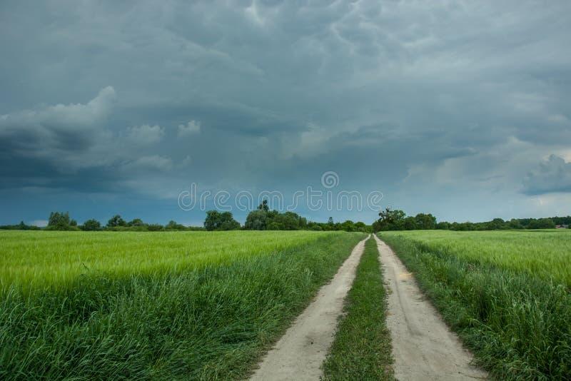 Stormiga regniga mörka moln och grusväg till och med ett grönt fält av korn arkivfoto