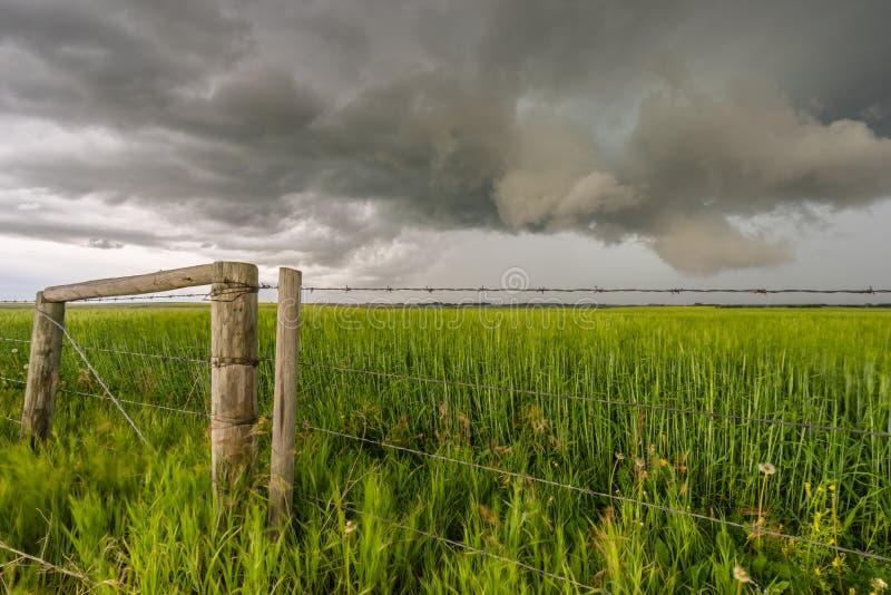 Stormigt landskap i grönt vetefält arkivfoton