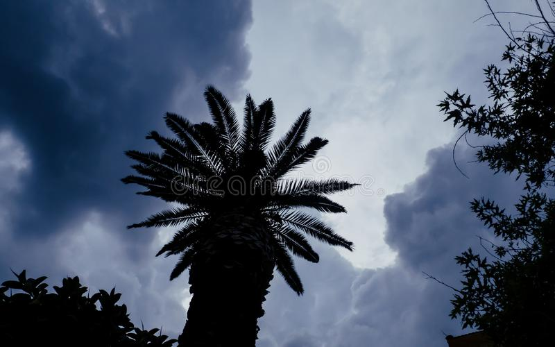 Stormmoln ?ver palmtr?det arkivfoton