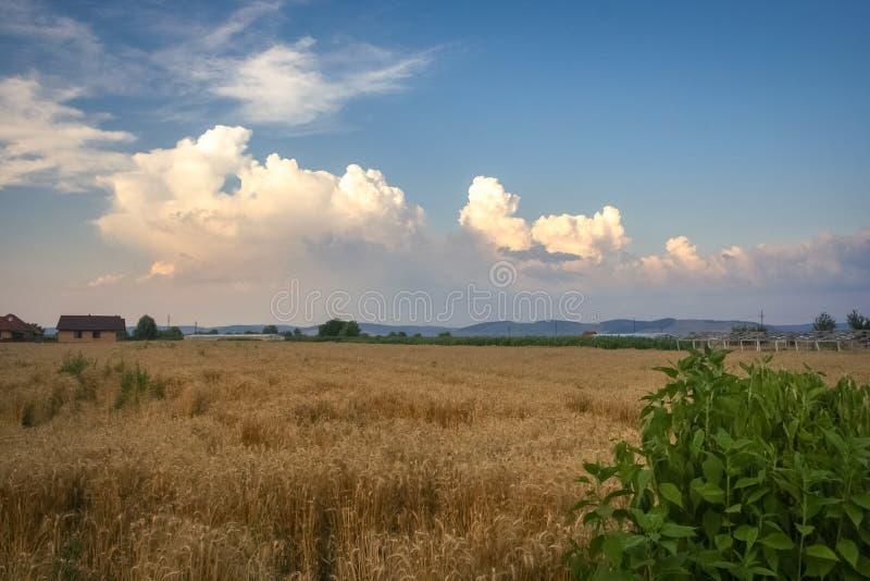 Stormmoln bygger över utlöparen av de Carpathian bergen i Transylvania, Rumänien arkivbilder