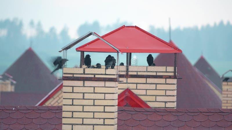 Stormo degli uccelli che prendono riparo dalla pioggia sui tetti urbani fotografie stock libere da diritti