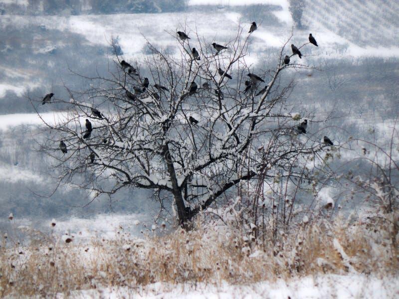 Stormo degli uccelli su un albero Paesaggio di inverno immagine stock libera da diritti
