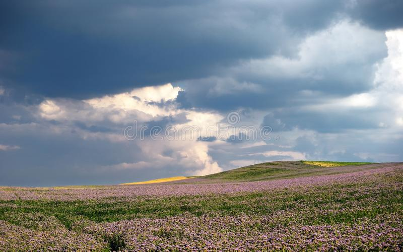 Stormy fields with flowers and clouds royalty free stock image