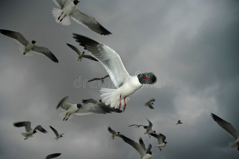 Stormy Flight stock image