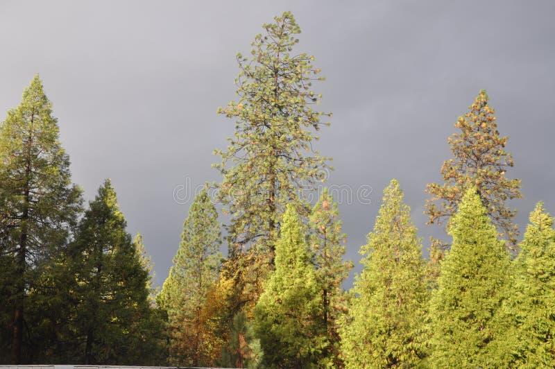 Stormy Gray Skies royalty free stock photo