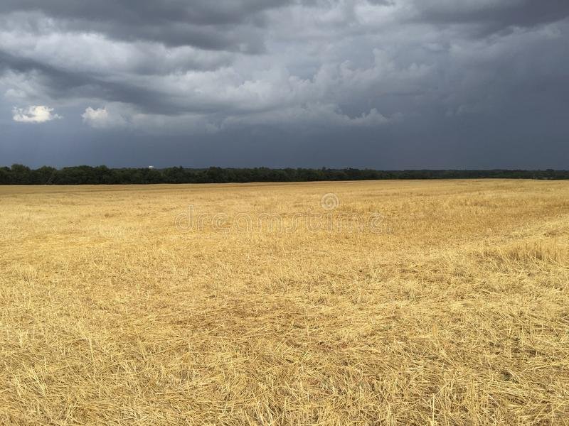 Stormy meadow stock photo