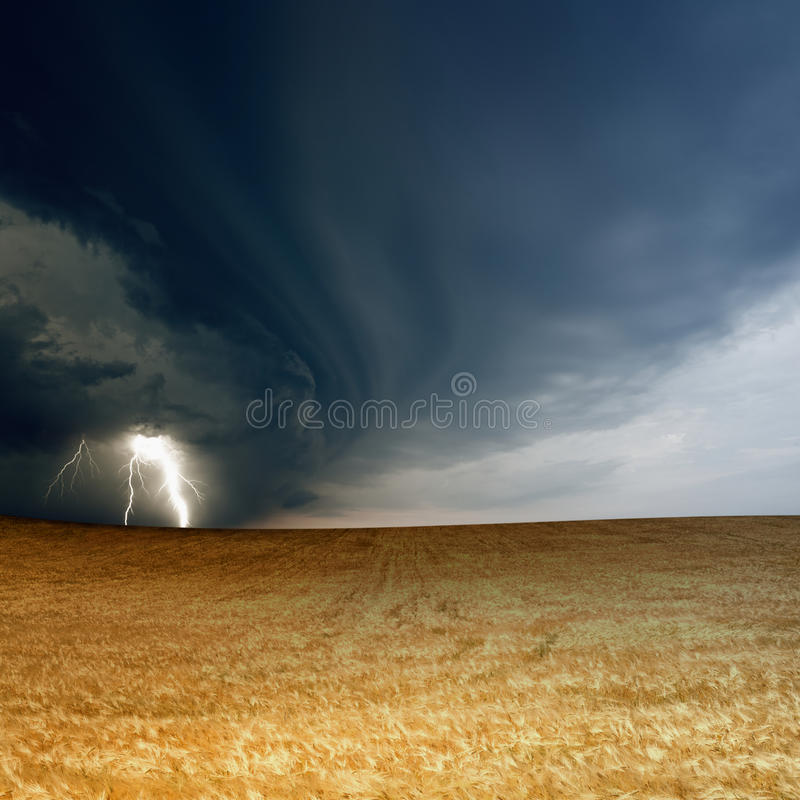 Download Stormy sky, ripe barley stock image. Image of meteorology - 31992067