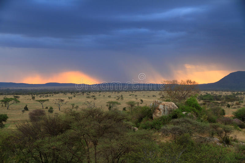 Stormy Sunset Over African Savannah royalty free stock images
