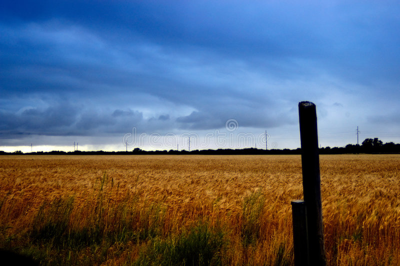 Download Stormy Wheat Field stock image. Image of season, meadow - 35015