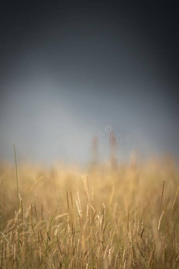 Stormy Wheat Field royalty free stock images