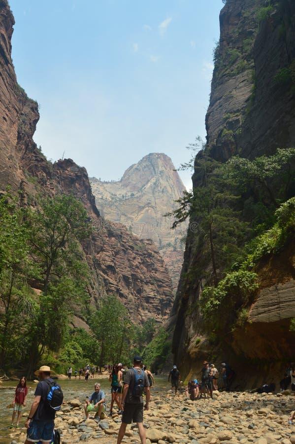 Storslagen klyfta med sikter av A mest högt berg i Zion Park Geologiloppferier royaltyfri bild