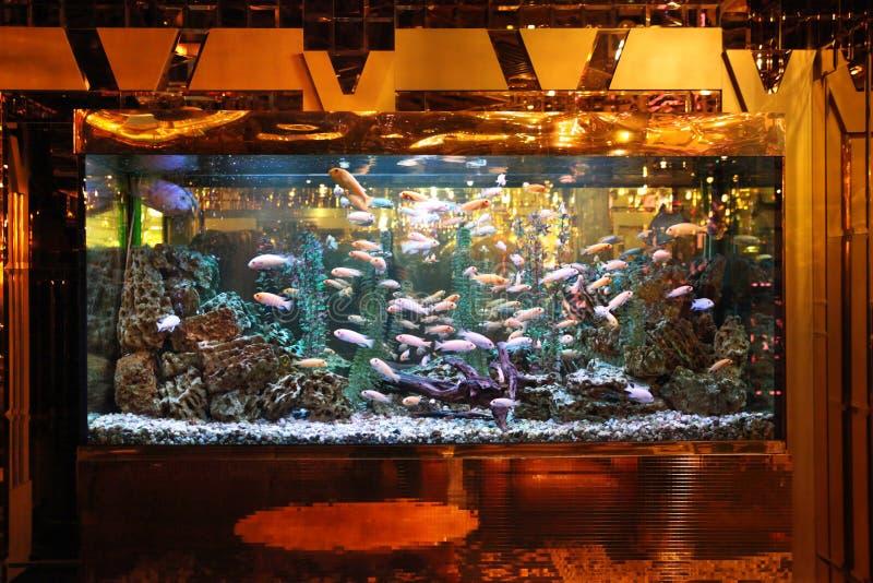 Stort akvarium med den färgrika fisken och belysning i inre arkivbild