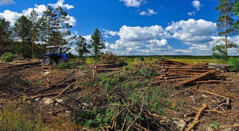 Stort avverka av skogen klippte träd ligger på jordningen bredvid traktoren på bakgrunden av den blåa himlen arkivbild